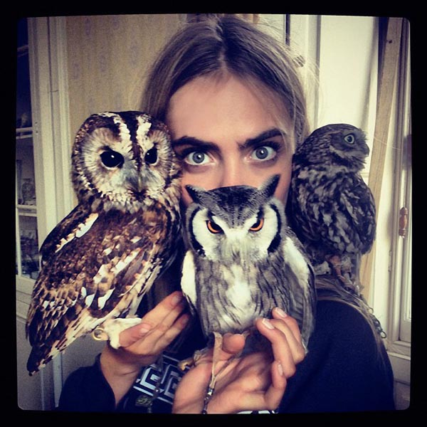 Cara delevingne and her owls